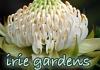 Irie Gardens