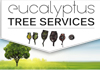 Eucalyptus Tree Services