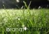 Branat Designs