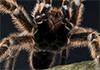 Bugs Away Pest Control