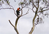 KTU Tree Services