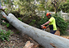 Newcastle Tree Services
