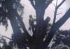 OConnor Tree Services