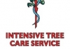Intensive Tree Care Service