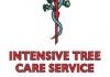 Intensive Tree Care Service