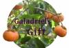 Galadriel's Gift Gardening Services