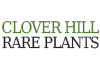 Clover Hill Rare Plants