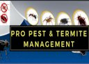 Pro Pest & Termite Management