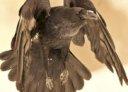 Raven Maintenance Services
