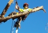 Skyhigh Tree Works