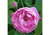 Jill Weatherhead Garden Design