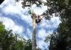 Galeforce Tree Services Brisbane