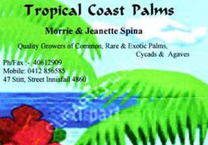Tropical Coast Palms
